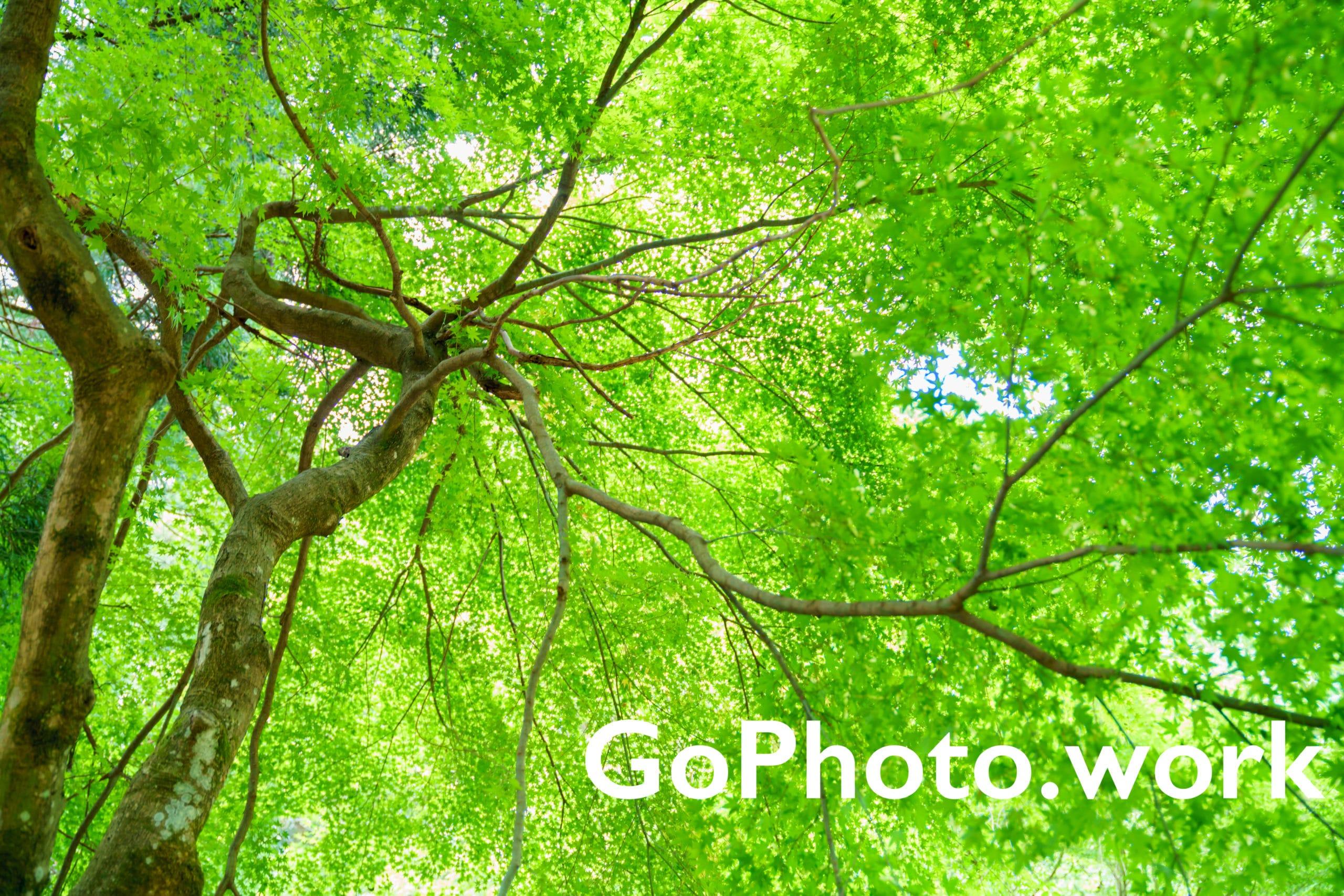 📷 GoPhoto.work