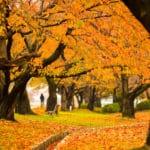 金沢市と白山市の紅葉